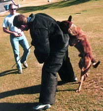 K-9 Officer Kimbo