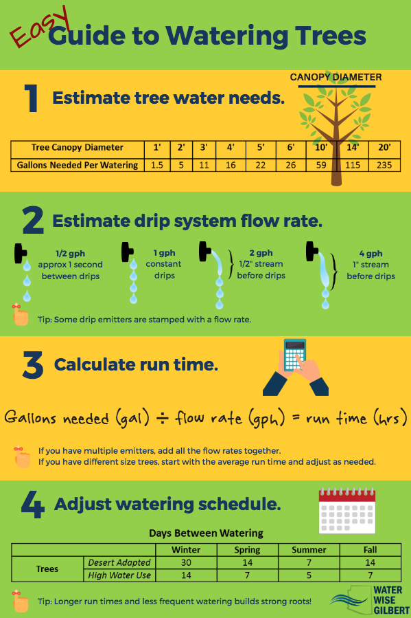 Easy Guide to Watering Trees - Water Blog