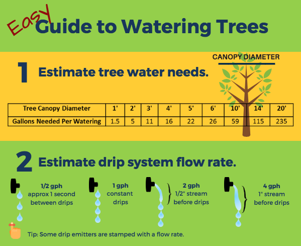 Easy Guide to Watering Trees - Thumb