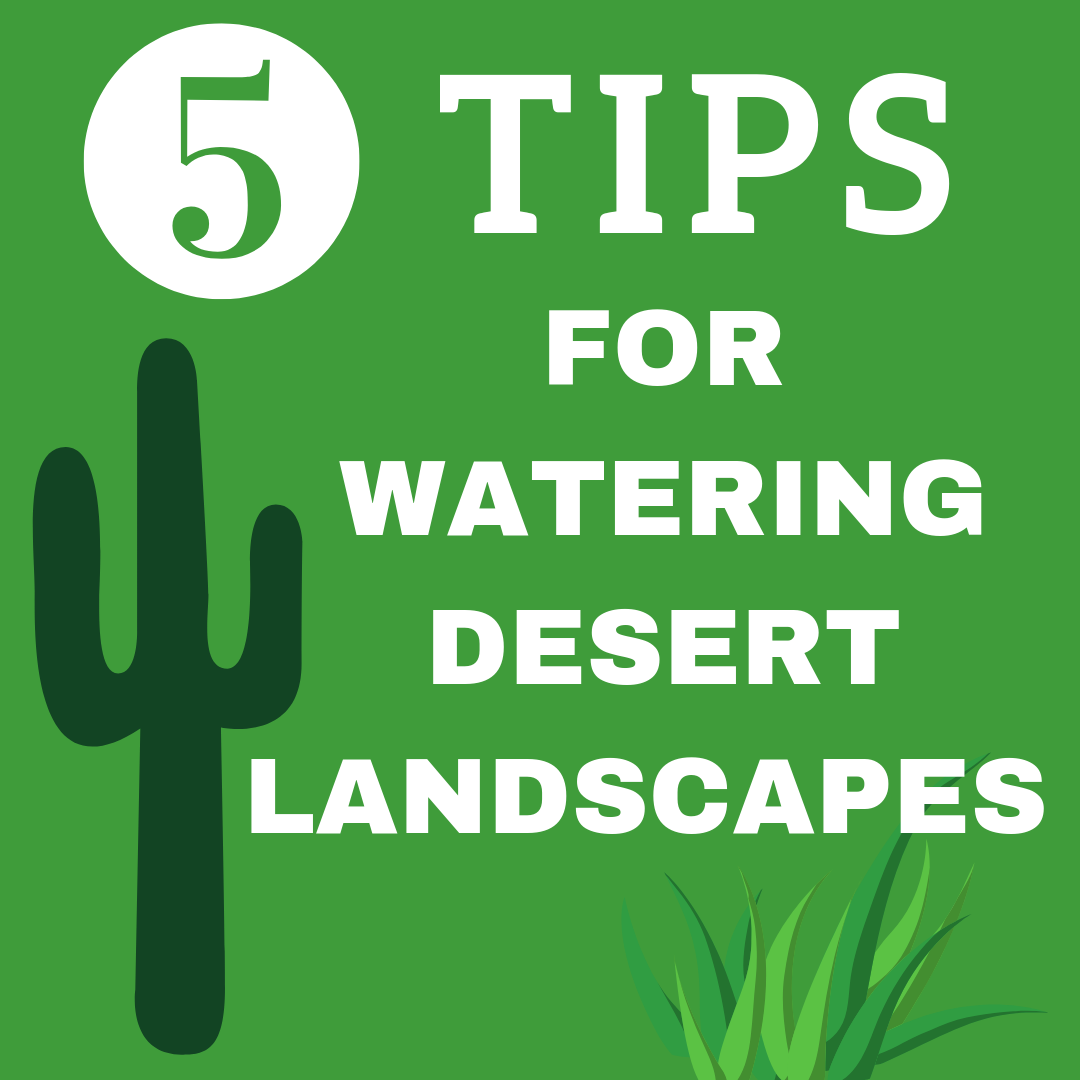 Smart Irrigation Month: 5 Water-Saving Tips for Desert Landscapes