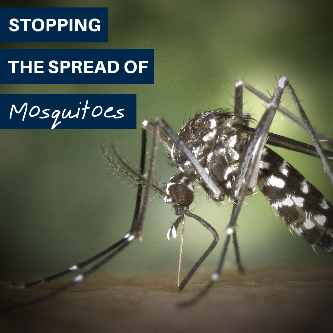 Tips for Eliminating Mosquito Breeding Grounds