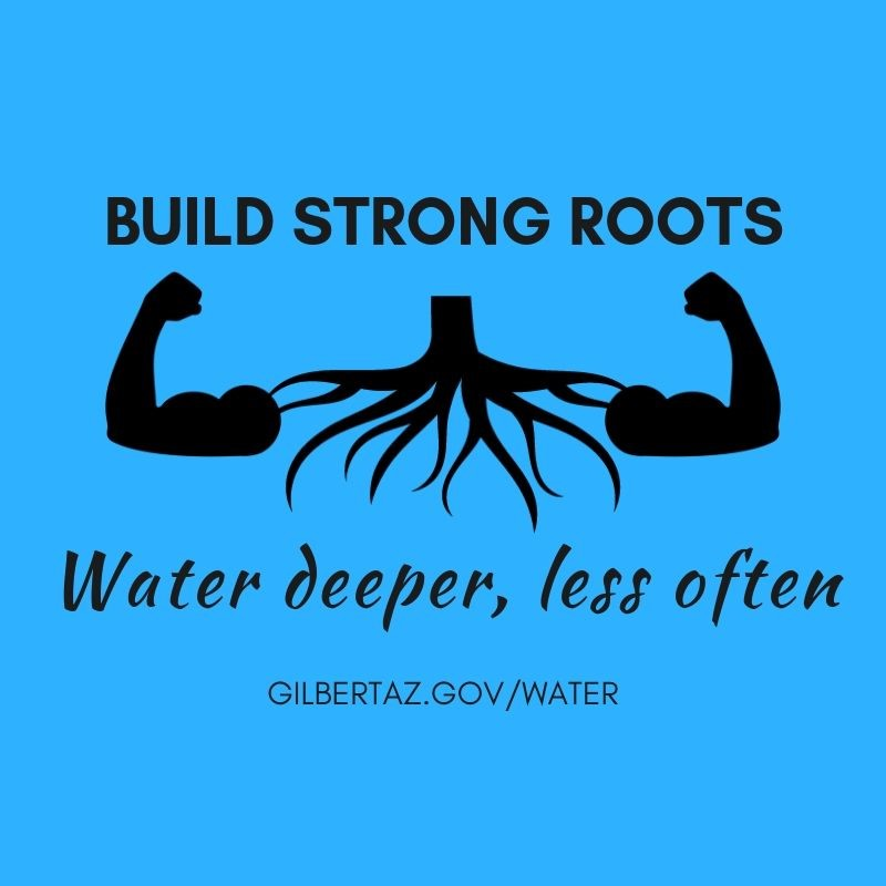 Build Strong Roots