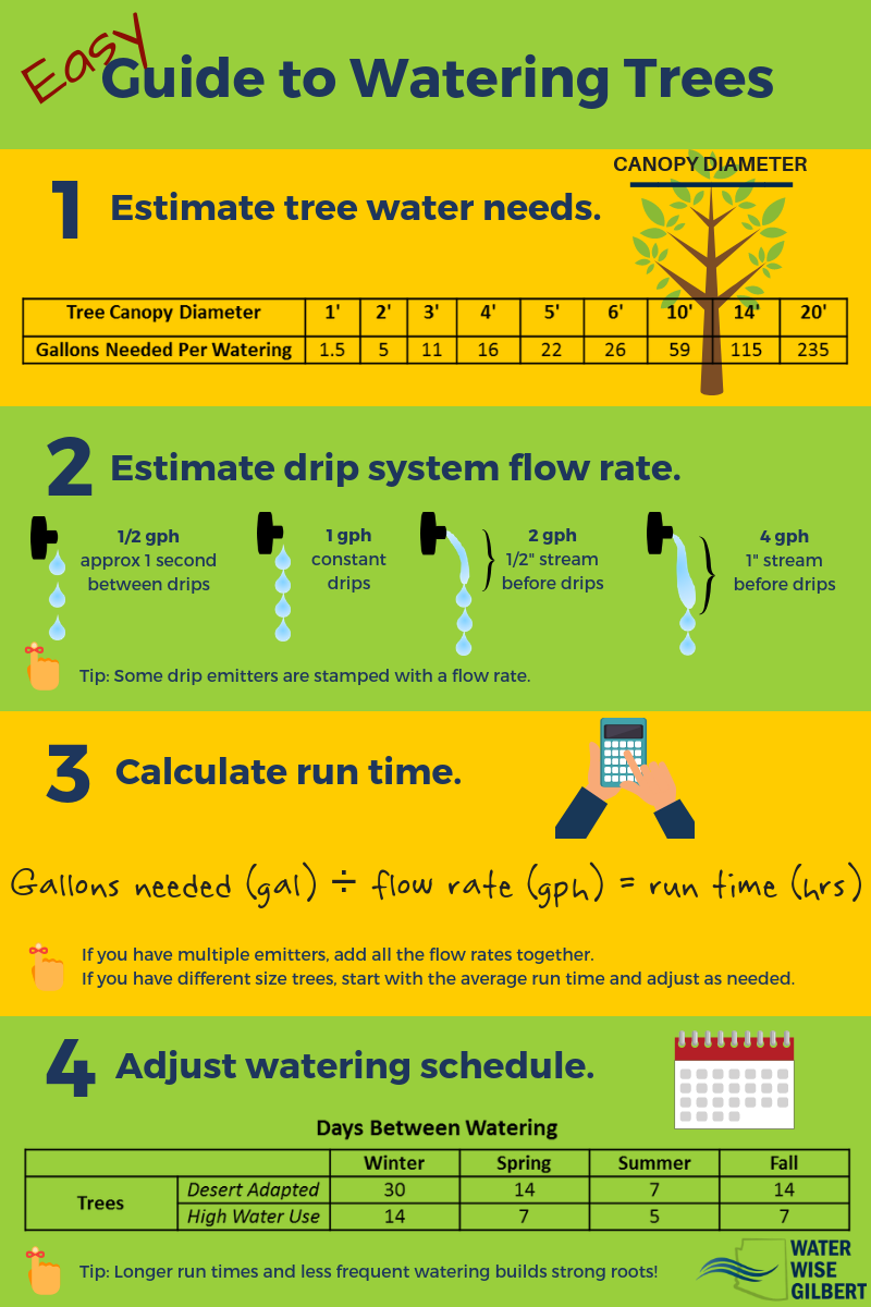 Guide to Watering Trees
